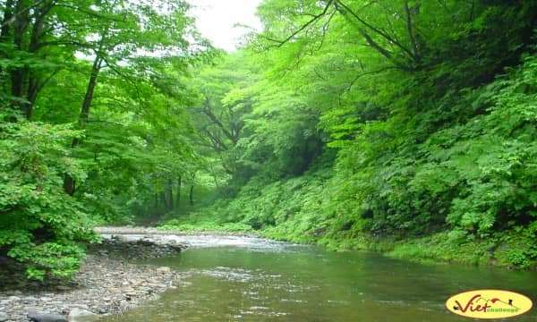 Kinh nghiệm đi rừng cho chuyến du lịch mạo hiểm