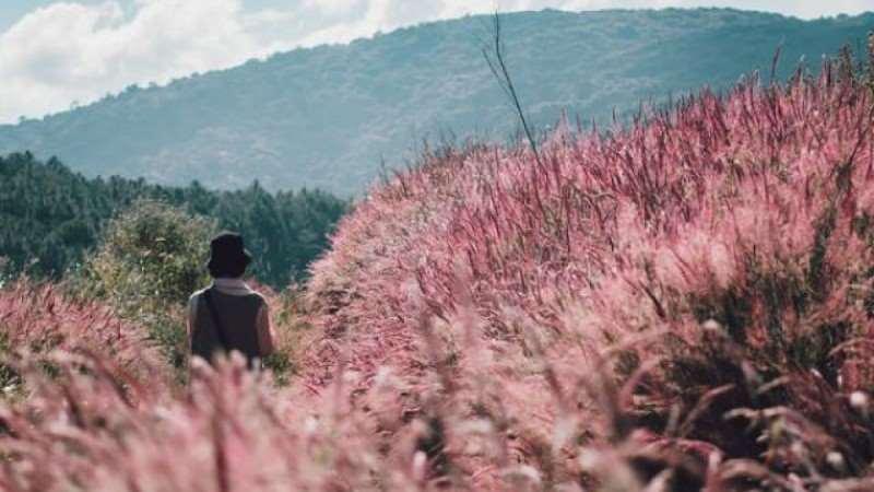 Một mùa hội cỏ hồng mới lại lung linh và huyền ảo