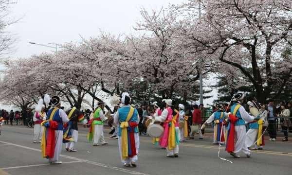 Say đắm với vẻ đẹp mùa xuân trên đảo Jeju - Hàn Quốc.