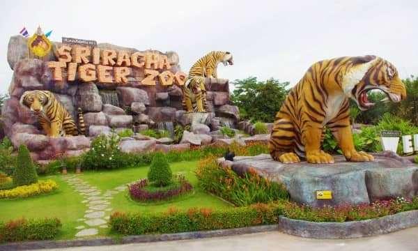 Thích thú với công viên hổ lớn nhất thế giới - Sriracha