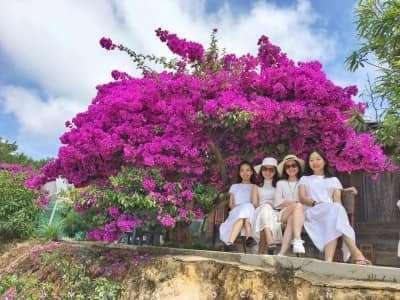 Những điểm check in Hoa Giấy cực xịn ở Đà Lạt