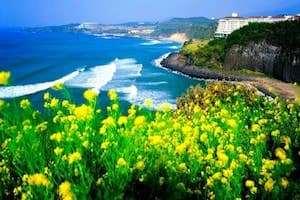 Những điều cần lưu ý khi du lịch đảo Jeju - Hàn Quốc.
