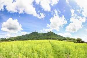 Ngẩn ngơ vẻ đẹp cánh đồng hoa cải vàng ở Đà Lạt đang nở rộ