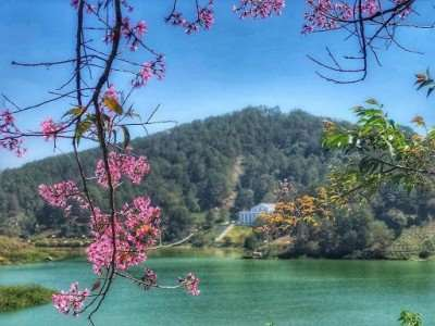 Ngắm khu vườn hoa anh đào ở Hồ Tuyền Lâm
