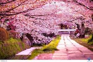 Top những lễ hội nổi bật của đảo Jeju - Hàn Quốc.