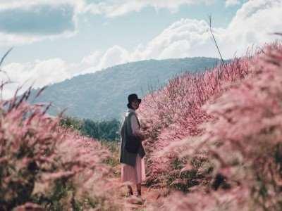 Check in mùa hoa cỏ cuối năm dọc đất nước