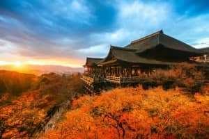 Những cung đường lá đổi màu vàng ươm tuyệt đẹp ở Seoul